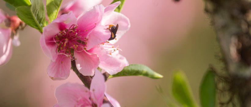 Taquaras – Vale das Flores