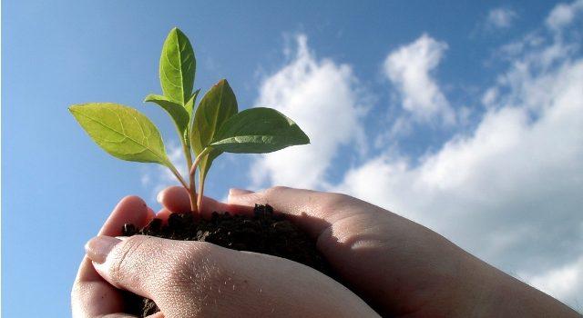Mãos na terra! Vamos plantar – jardim é terapia